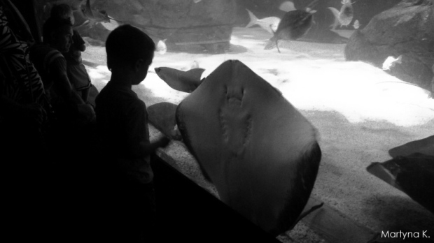 ripley's aquarium of canada (4)